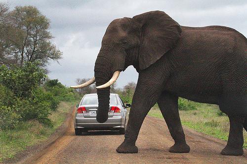Namibia_Car_Rental